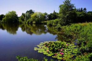 Открытые источники (озёра, реки)
